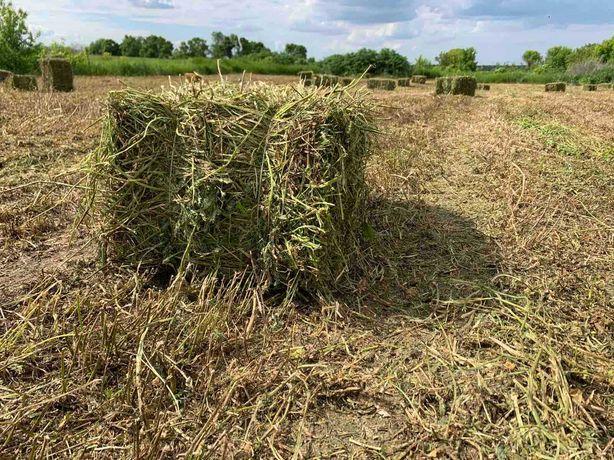Продаю сено в тюках в рулонах