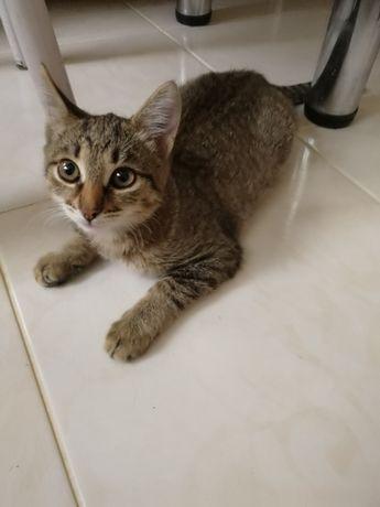 Котенок 3 месяца ищет любящию семью