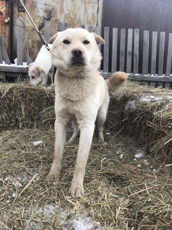 Собака в хорошие руки