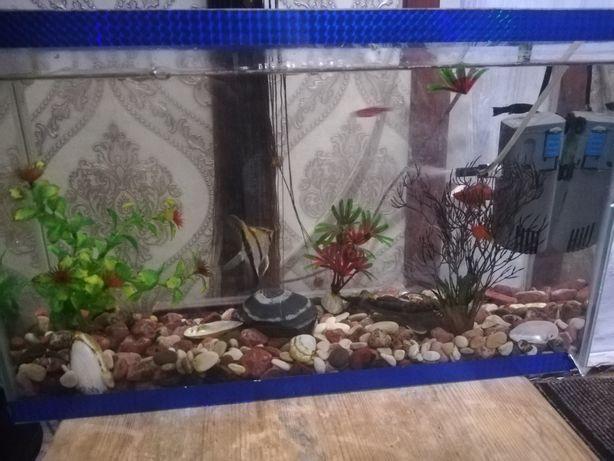 Продам аквариум с рыбками 8000тг.