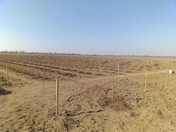 Infintez plantatii horticole si peisagere