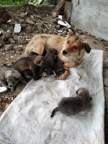 Павлодар! Спасите дачных щенков  !!!