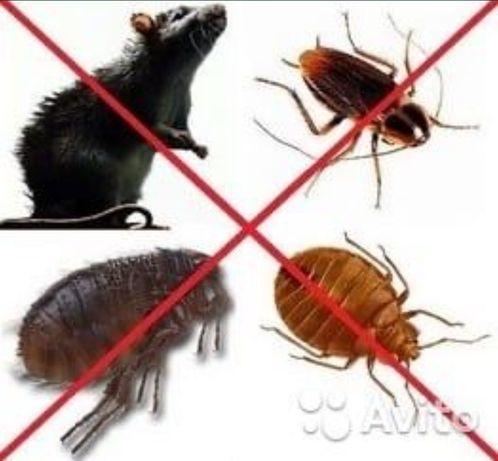 Дезинфекция уничтожаем любых насекомых и грызунов