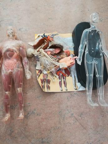 Продавам човешкото тяло