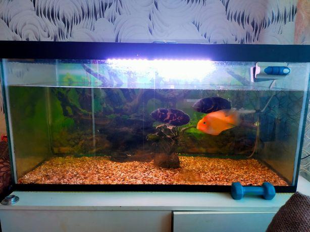 Продам аквариум 300 литров