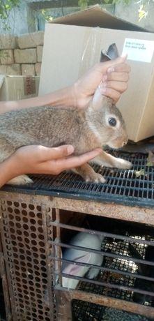 Кролики 3х месячные