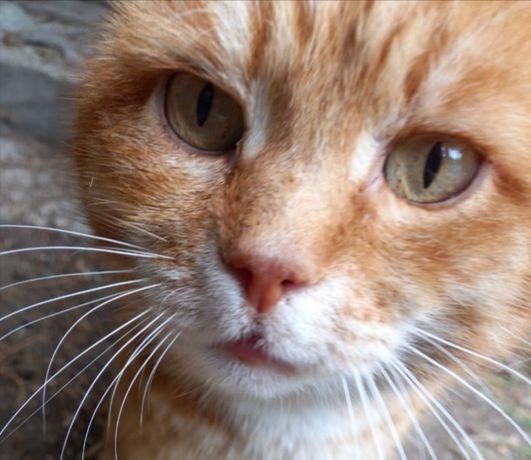 Котик ищет старых или новых хозяев