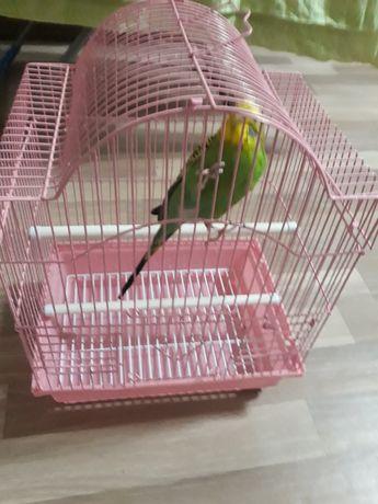 Попугай домашняя птица