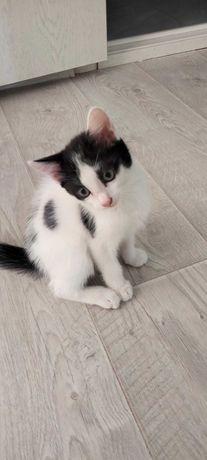Котята отдам в добрые заботливые руки