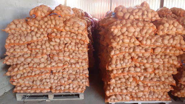 Vand cartofi consum...