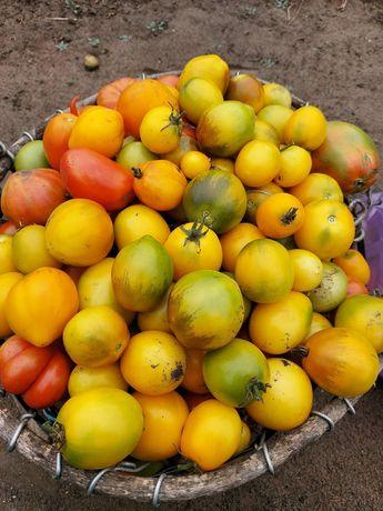 Продам дачные помидоры