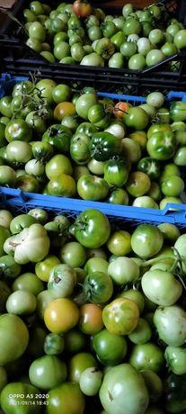 Продам зелёные помидоры