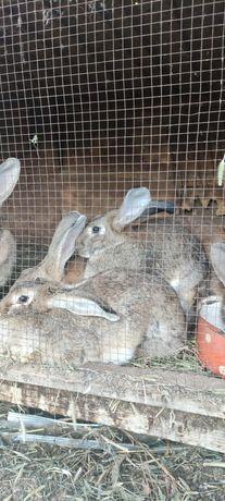Кролики. От 3000 тг