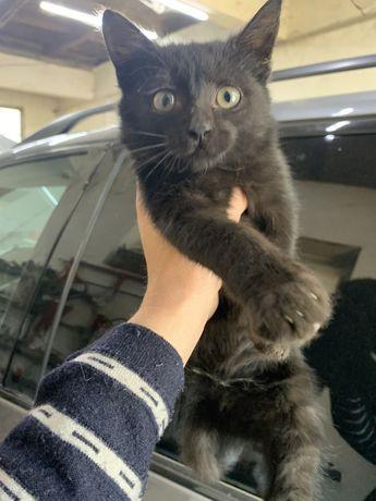 Котята отдам в добрые руки