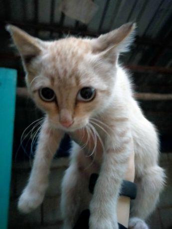 Котенок девочка, мышеловка
