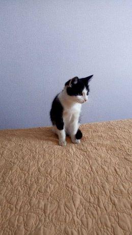 Котенок в добрые руки ,очень ласковый, умеет ловить мышей