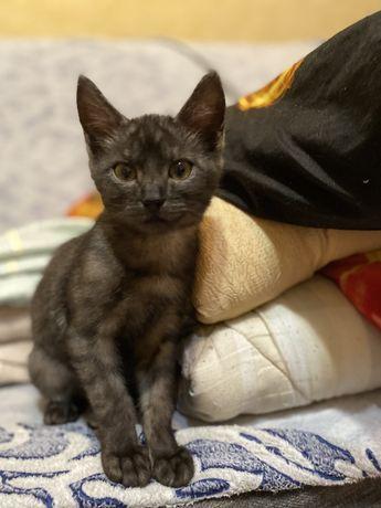 Отдам даром в хорошие руки котенка