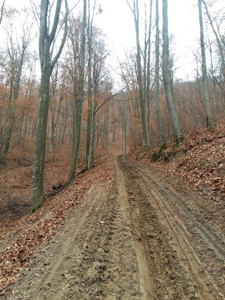 Vând pădure