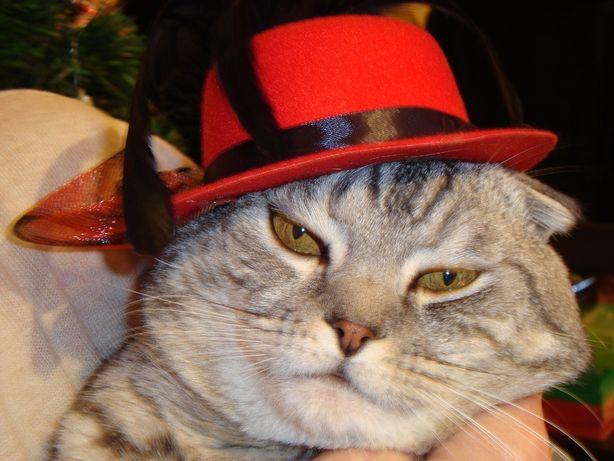 Продам котят шотландской вислоухой породы
