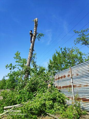 Рубка и спил деревьев любой сложности