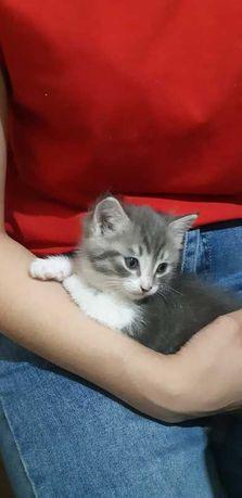 Отдам котенка срочно, 2 месяца