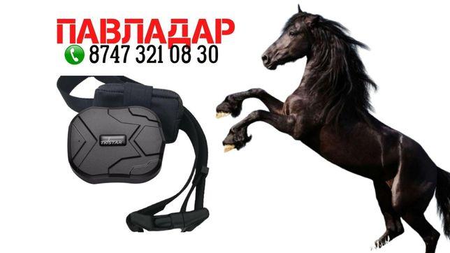 ЖПС для лошадей, GPS трекер жылқыға.