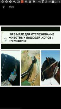 Прибор Жпс для Лошадей