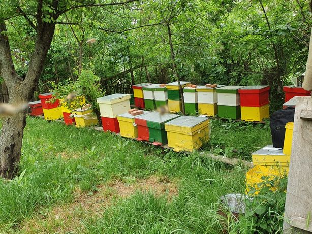 Vand familii de albine. (afacere la cheie)
