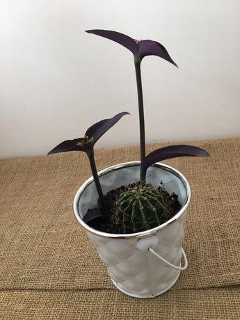 Aranjament plante in ghiveci decorativ
