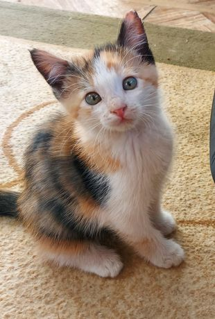 Кошка мышеловка! Город Тараз