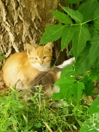 Отдам котят в хорошие ручки!!!