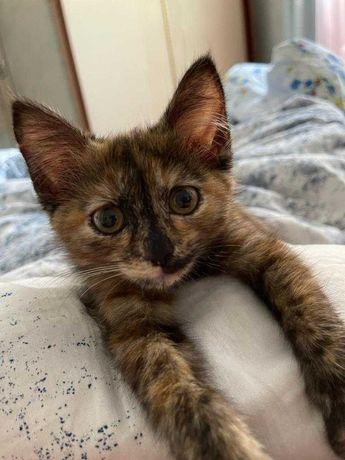 подарю котенка два месяца
