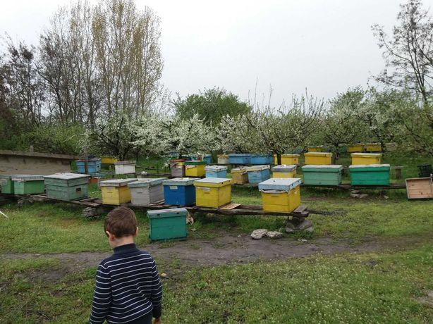 Miere polifloră naturală