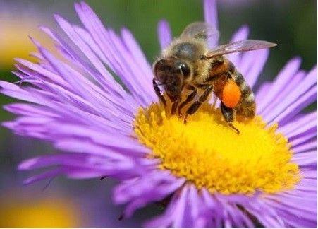 Vand 10-20 familii de albine!!!