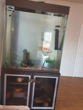 Акуармим с залоти рыбятка