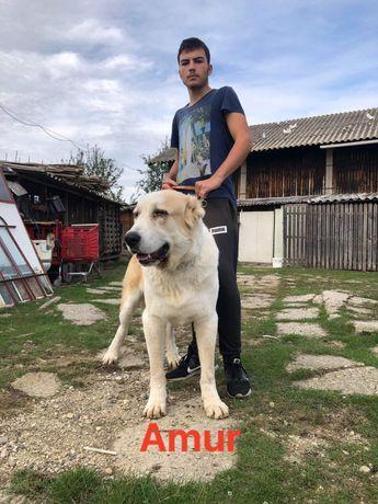 Mascul Asia Centrala !
