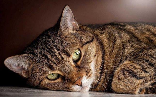 Кот Борис - отличный крысолов...