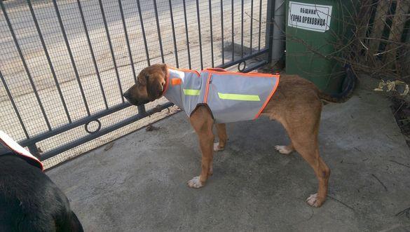 Бронежилетка за кучета