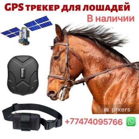 GPS Трекер для лошадей/ Малға GPS