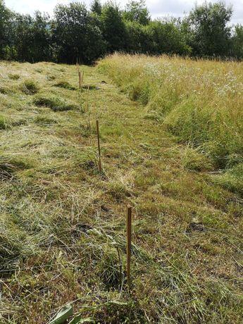 Cosesc iarba din gradinTai lemne cu drujba curat de spini sap șanțuri