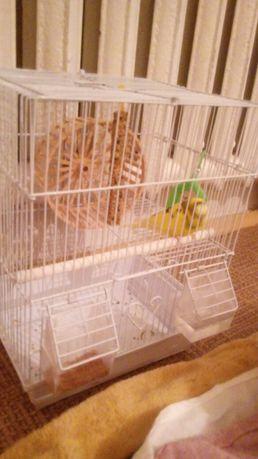 Здоровый, желтый попугай