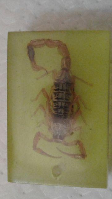 Брелок - Гороскоп Скорпион.