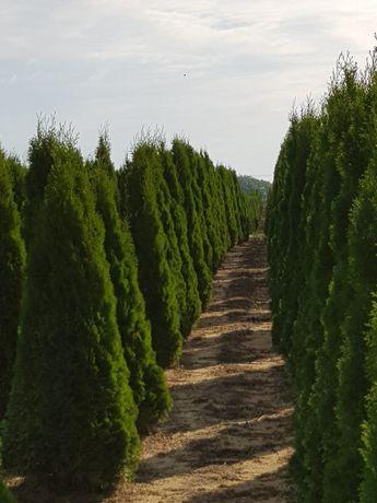 Plante ornamentale calitatea 1 pentru o gradina de vis