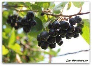 Варенье из черноплодной рябины для гипертоников 1700 тг за 500 мл