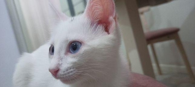 Кошка (котёнок) 6 месяцев