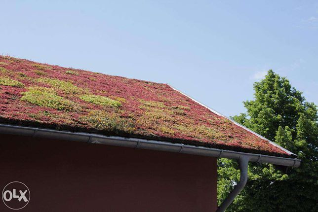 Materiale acoperișuri verzi extensive sau intensive