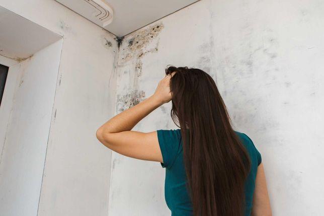 Уничтожение плесени, вирусов, бактерий, аллергенов, запаха, насекомых.