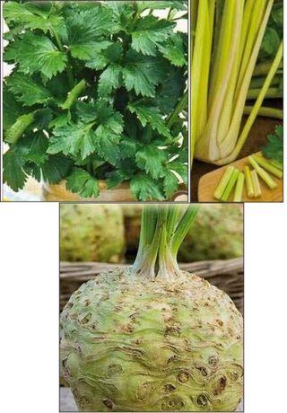 Seminte de Telina de frunze sau de petiol sau de radacina giganta - 1g