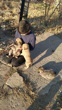 Даром щенята дворняжки