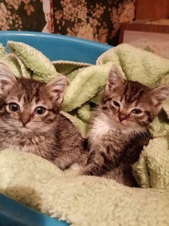 Котята отдаются даром в добрые руки